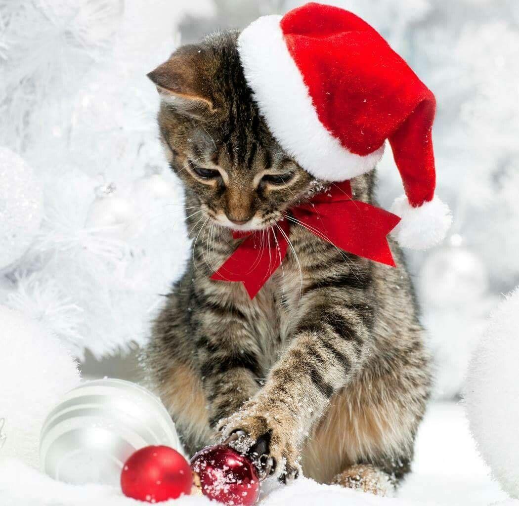 cat christmas tiere katze weihnachten katzen und. Black Bedroom Furniture Sets. Home Design Ideas