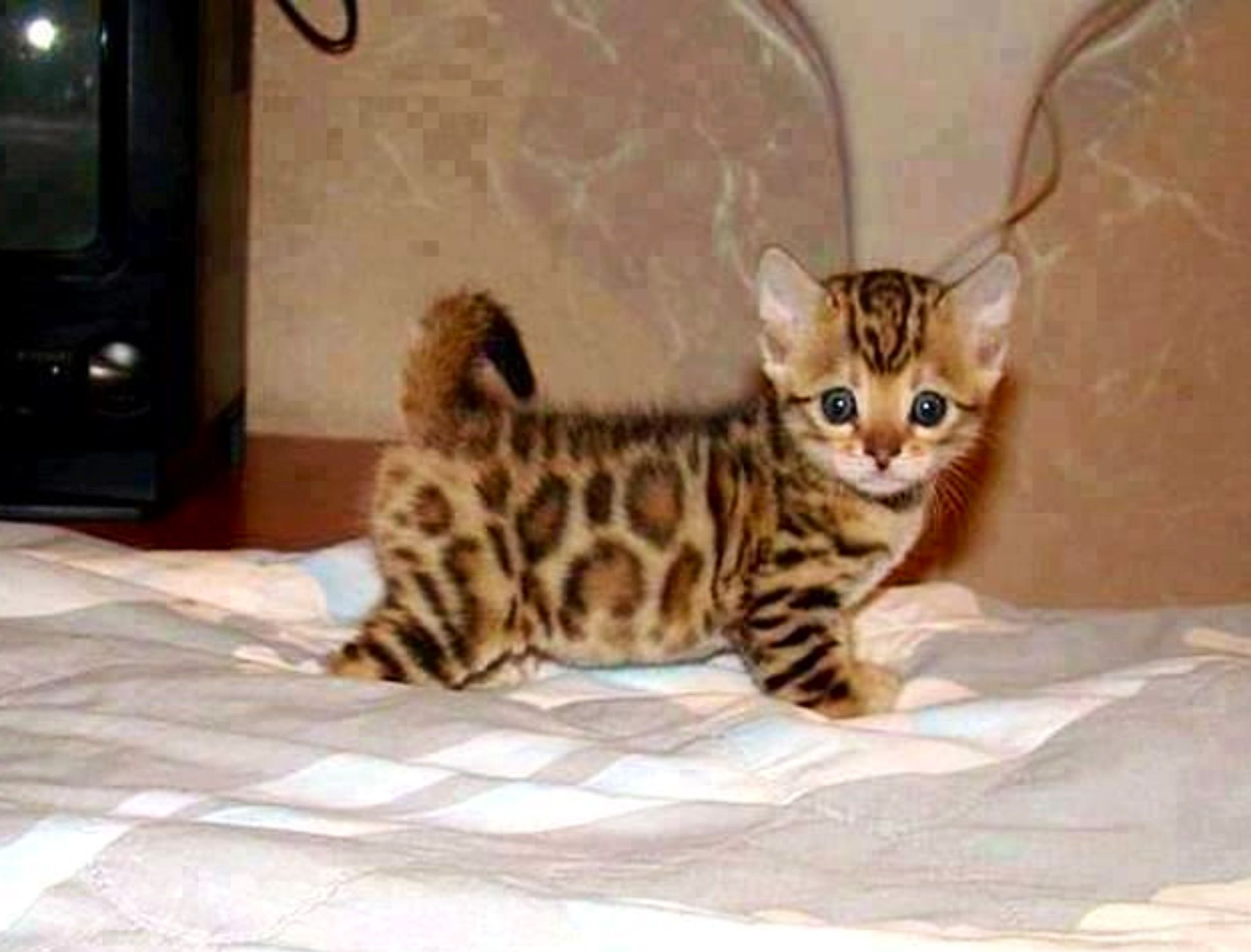 Pin by Jessica Dwyer on Cat and baby kitties Pinterest