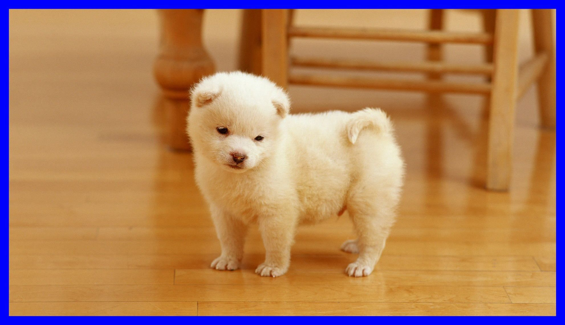 Maltese Puppies Wallpapers 46 Best Free Maltese Puppies Hd Wallpaper For Pc Beautiful Dogs Photos Really Cute Dogs Puppy Wallpaper