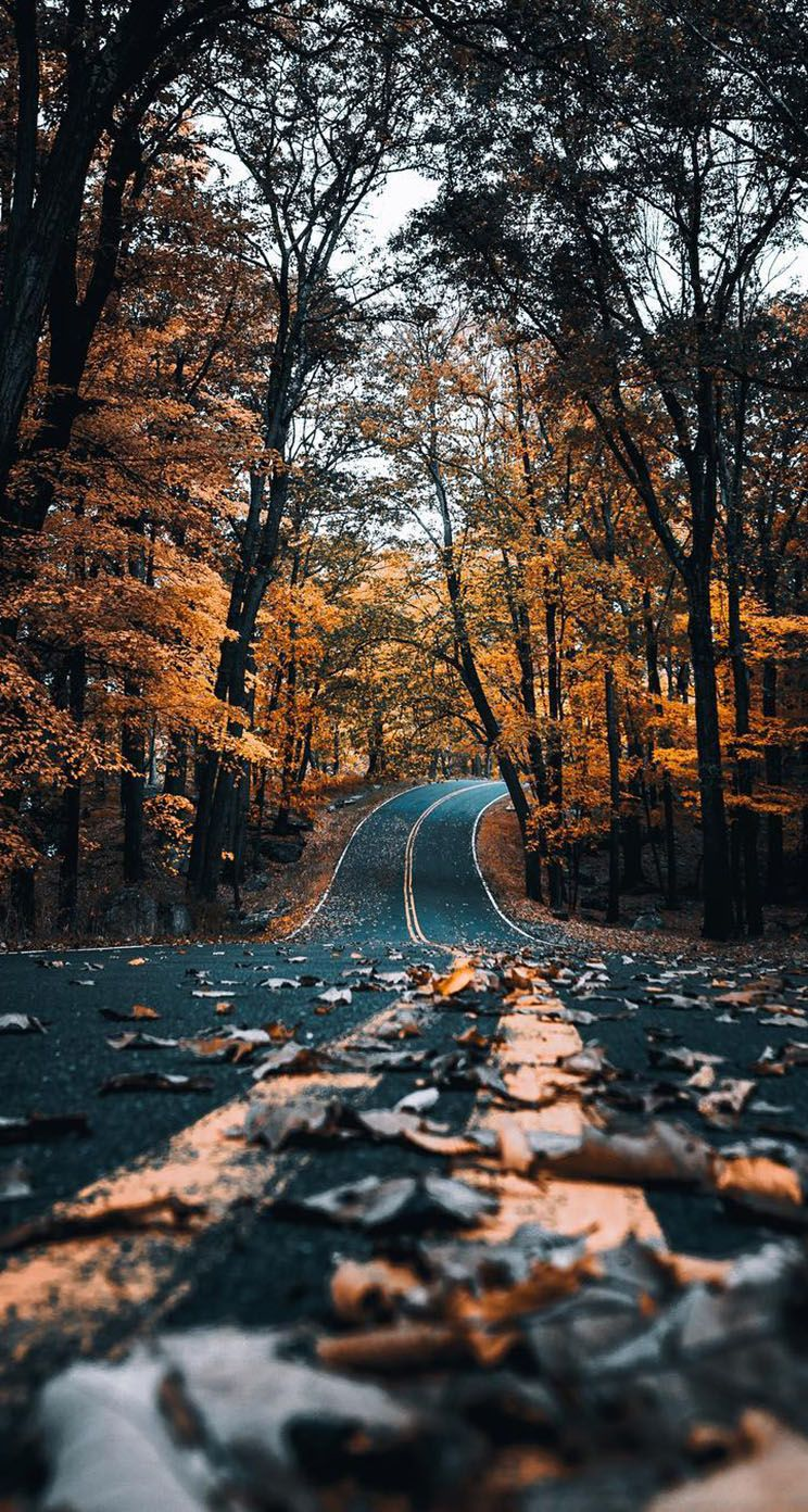 Autumn Road With Leaves Iphone Wallpaper Backgrounds Cool Landscape Photography Nature Photography Inspiration Nature Landscape Photography