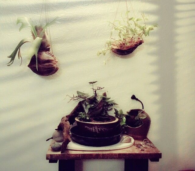 Indoor garden fern and orchid.