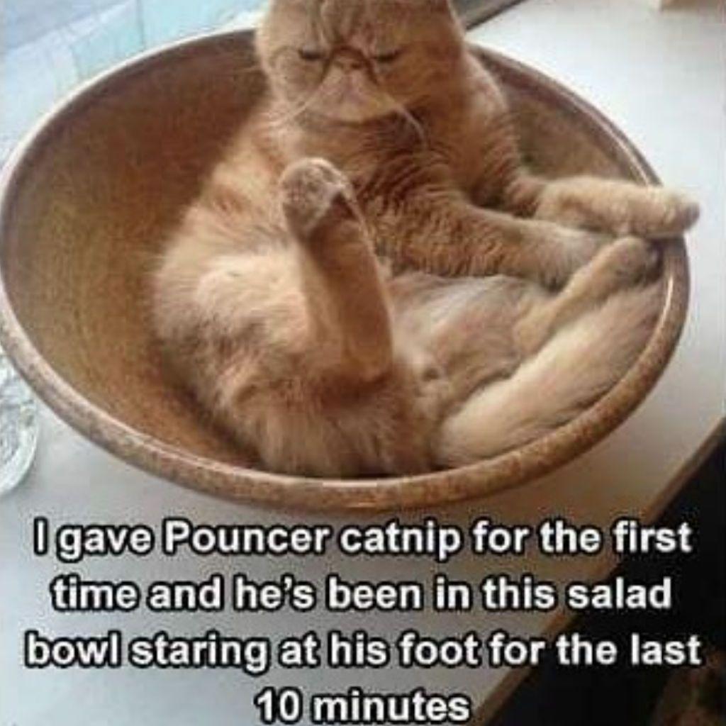 22 Cat Memes Catnip Funny animal pictures, Funny animals