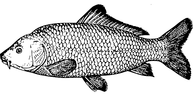 Free Image on Pixabay - Fish, Carp, Species, Fins, Scale