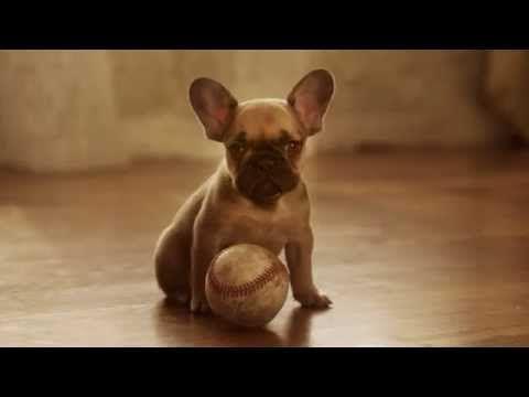 Doritos® Puppy Dad - YouTube