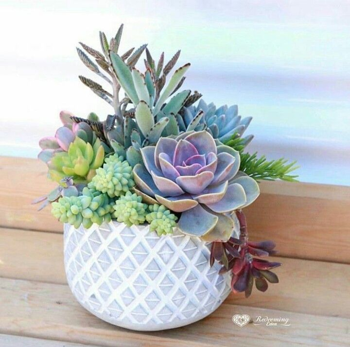 Gift Plants And Plant Ideas Perfect Container Garden For You: Succulents - Garden With Style