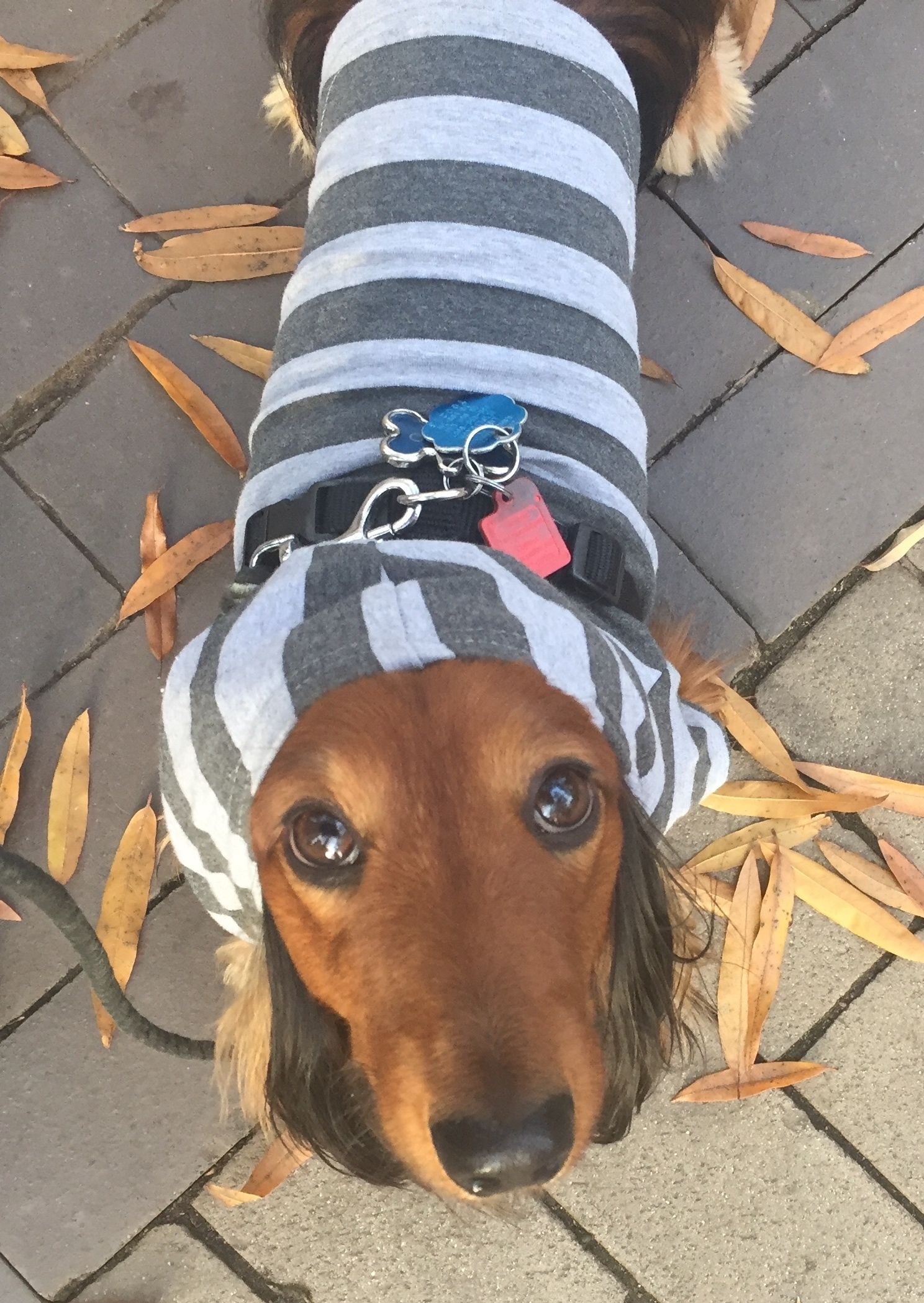 Soft Stretchy And Lightweight Dog Hoodies For Small And Medium
