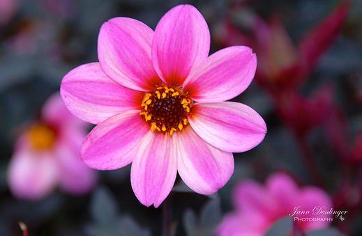 Jann Denlinger Photogrpahy | Photographer Lancaster PA | Flowers & Fauna