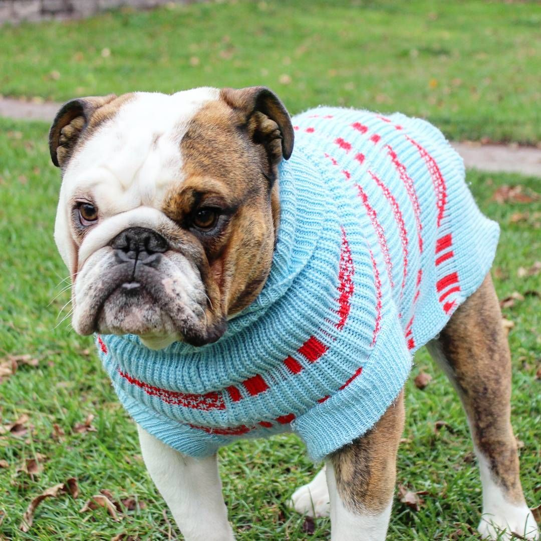 Large Dog Clothes Knitted Sweater Jumper Warm Coat Hoodie for Labrador Bulldog