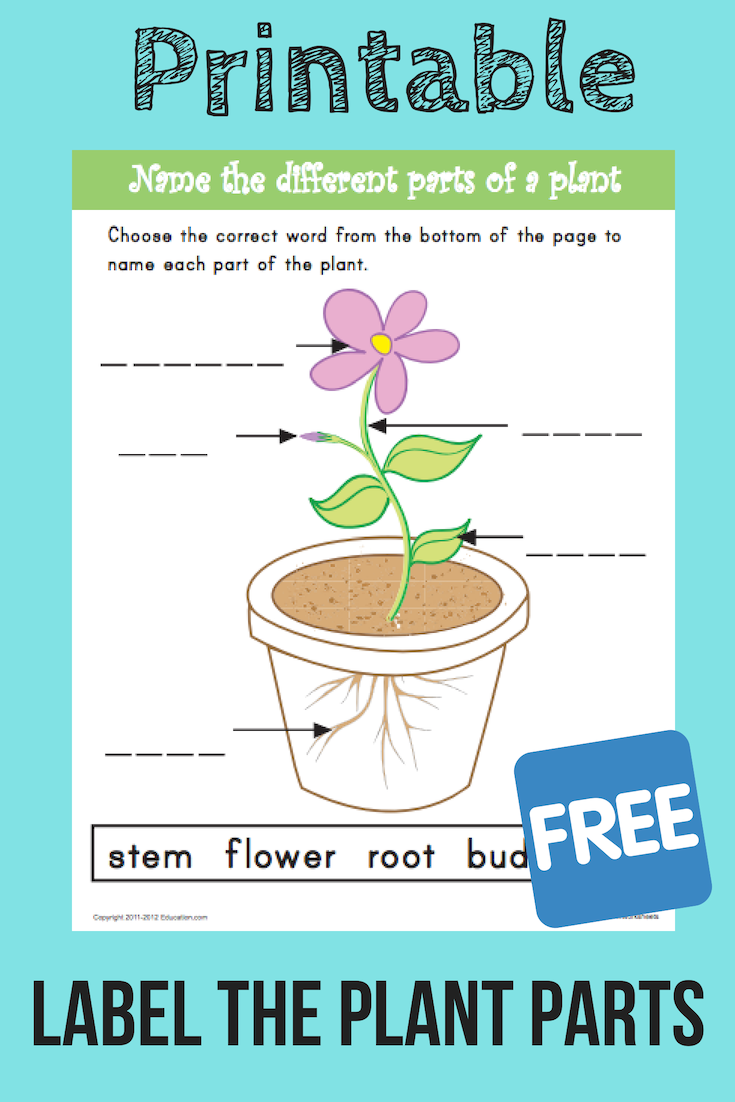 Name The Parts Of A Plant Kindergarten Activities And Resources