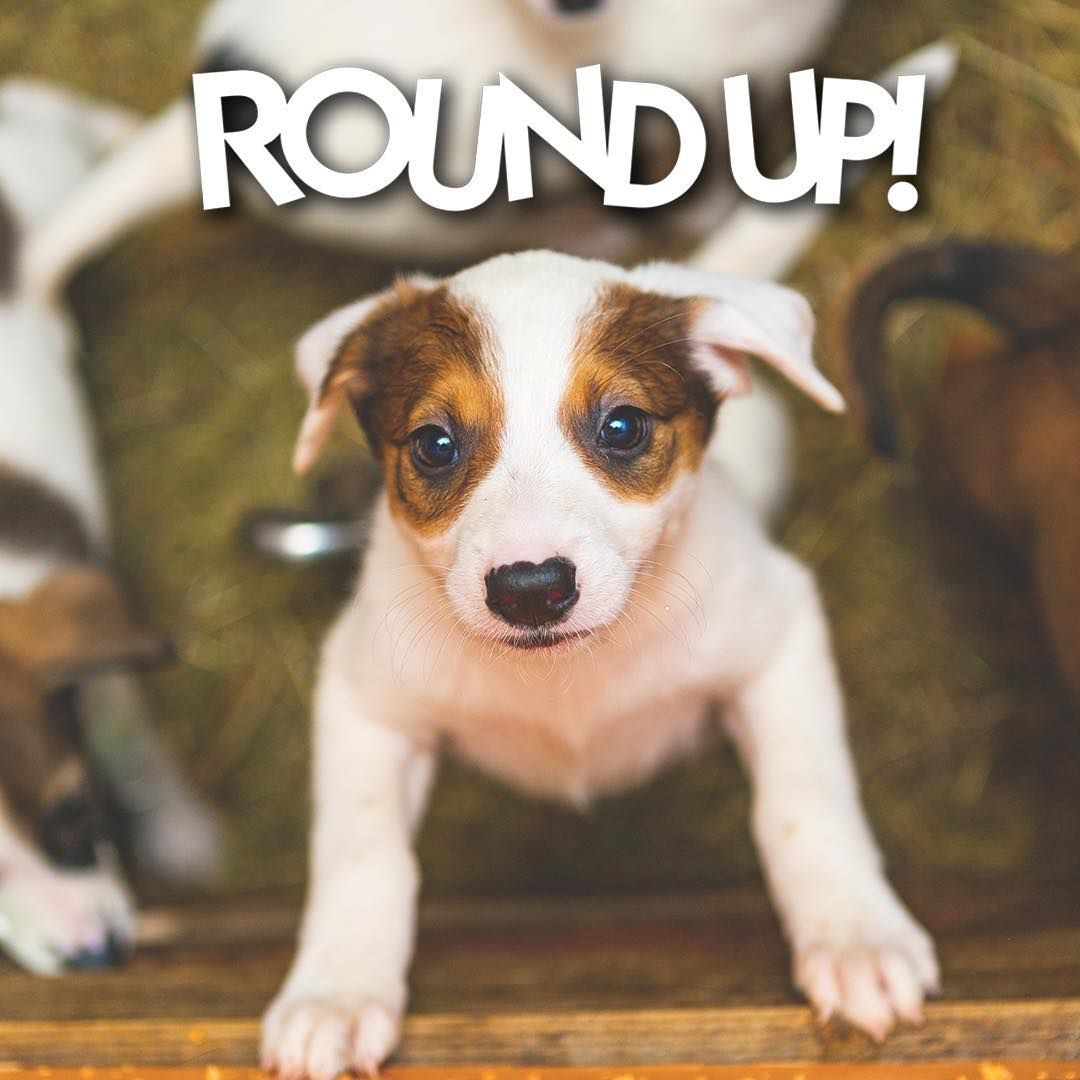 Grange Co-op proudly supports local animal shelters and we ...