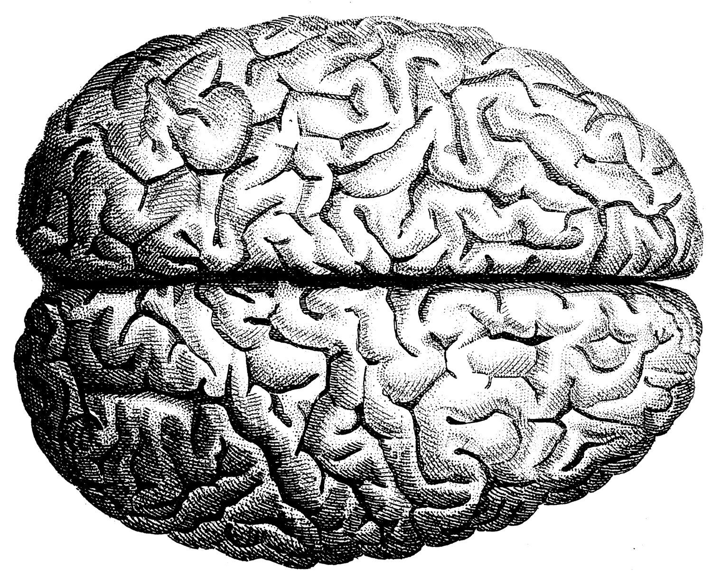 Human Brain Illustration Inspiration In 2018 Pinterest Brain