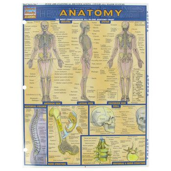 Anatomy Quick Study Guide | Anatomy, Craft activities and Lobbies