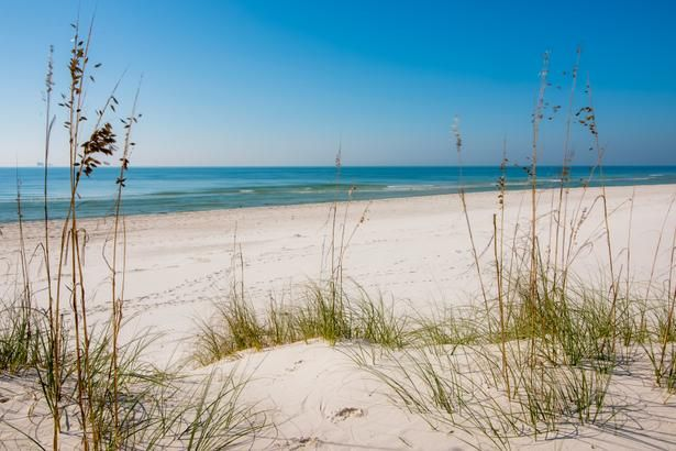 Fort Morgan Beach Beautiful And Fairly Secluded Alabama Lots Of Wildlife