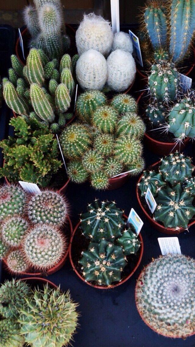 Cool Backgrounds Tumblr Wallpaper Desktop Wallpapers Succulents Plant