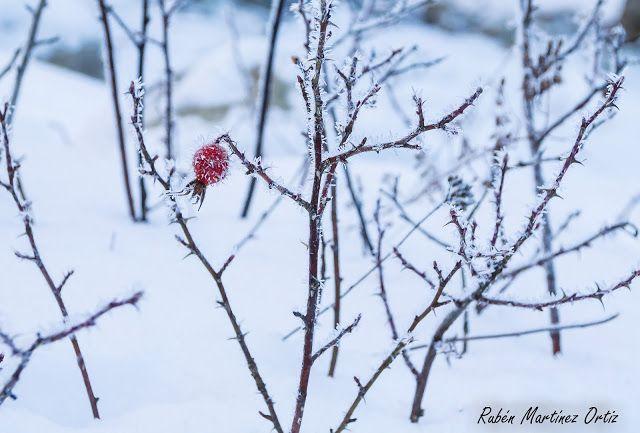 www.rutinadas.blogspot.com ; Nieve y hielo... invierno en el Pirineo Aragones
