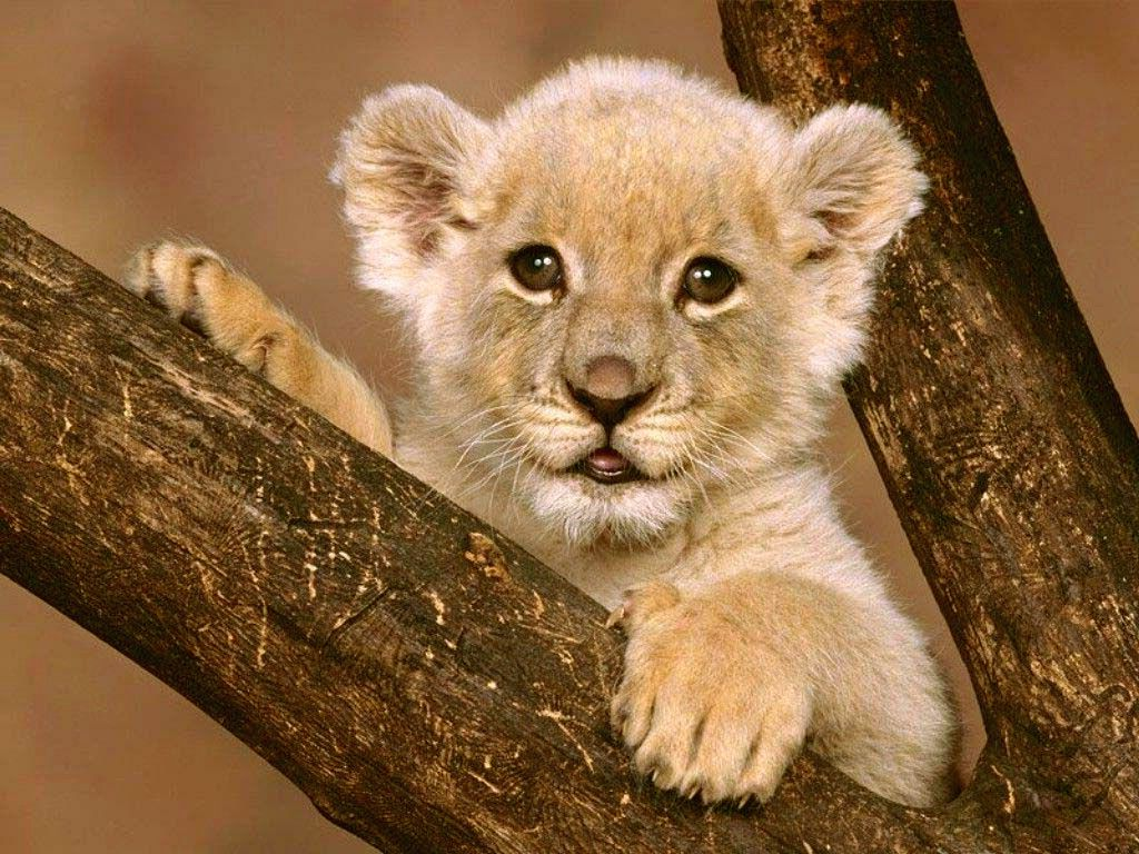 would you eat LION?? as in..the lion king? Baby animals