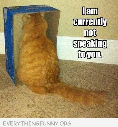 Pin By Tayla Hansen On Funny Caption Pictures Funny Animals Funny Cat Memes Animal Captions