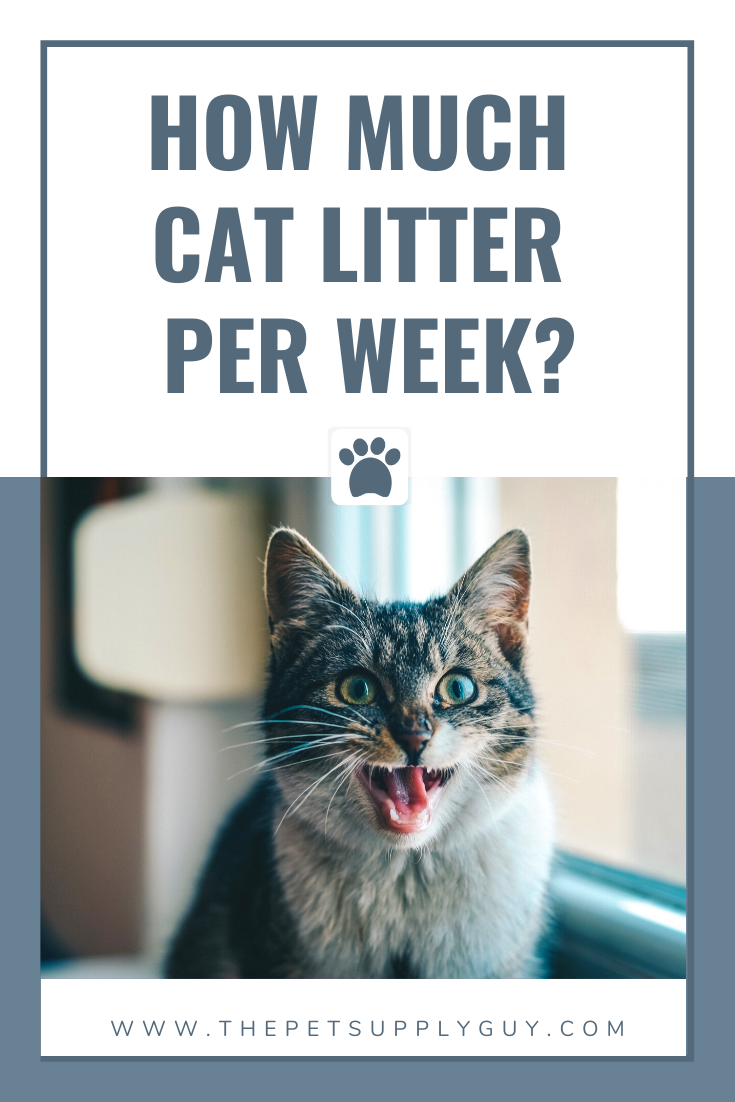 How Much Cat Litter Per Week The Pet Supply Guy In 2020 Cat Litter Cats Cat Care