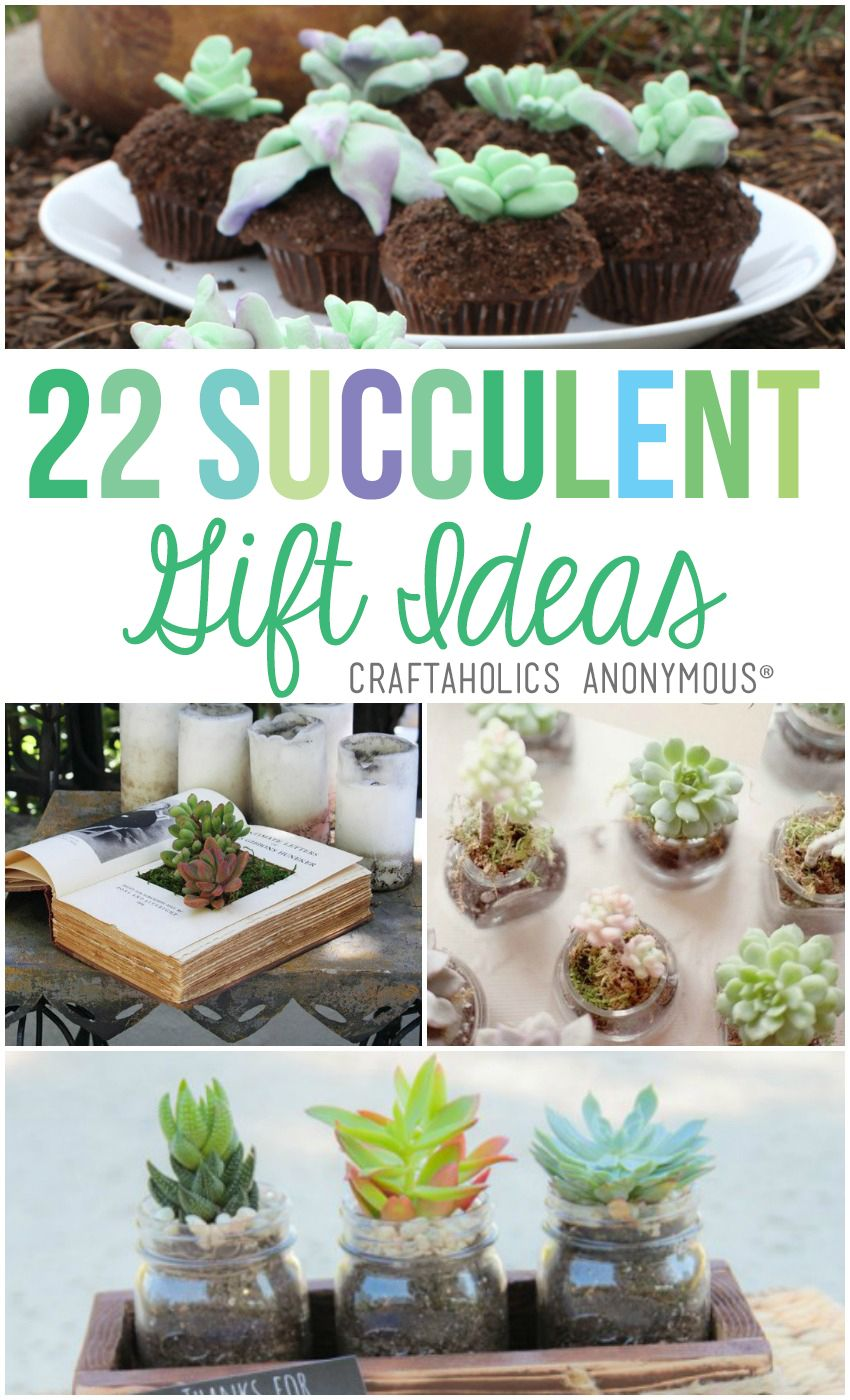22 Succulent Gift Ideas Craftaholics Anonymous