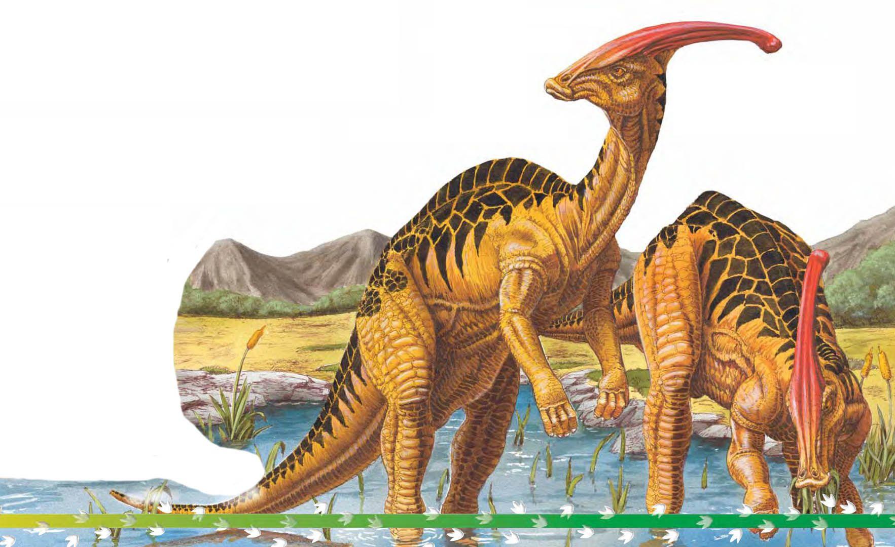 Parasaurolophus; Late Cretaceous (76.5 73 Ma