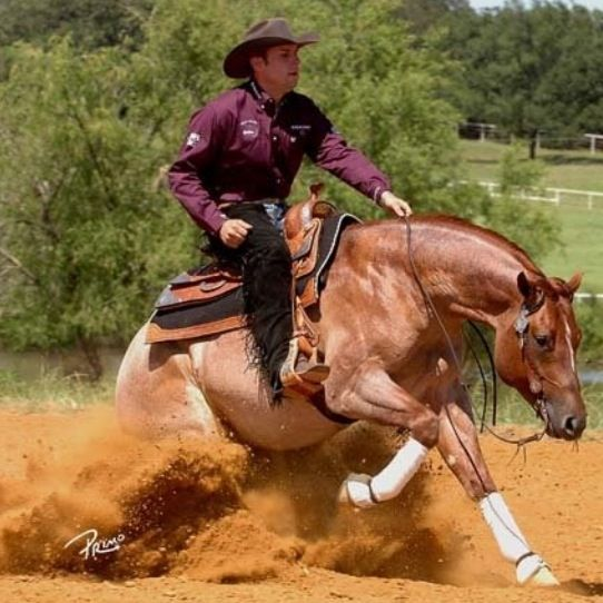 Reining Pictures 18