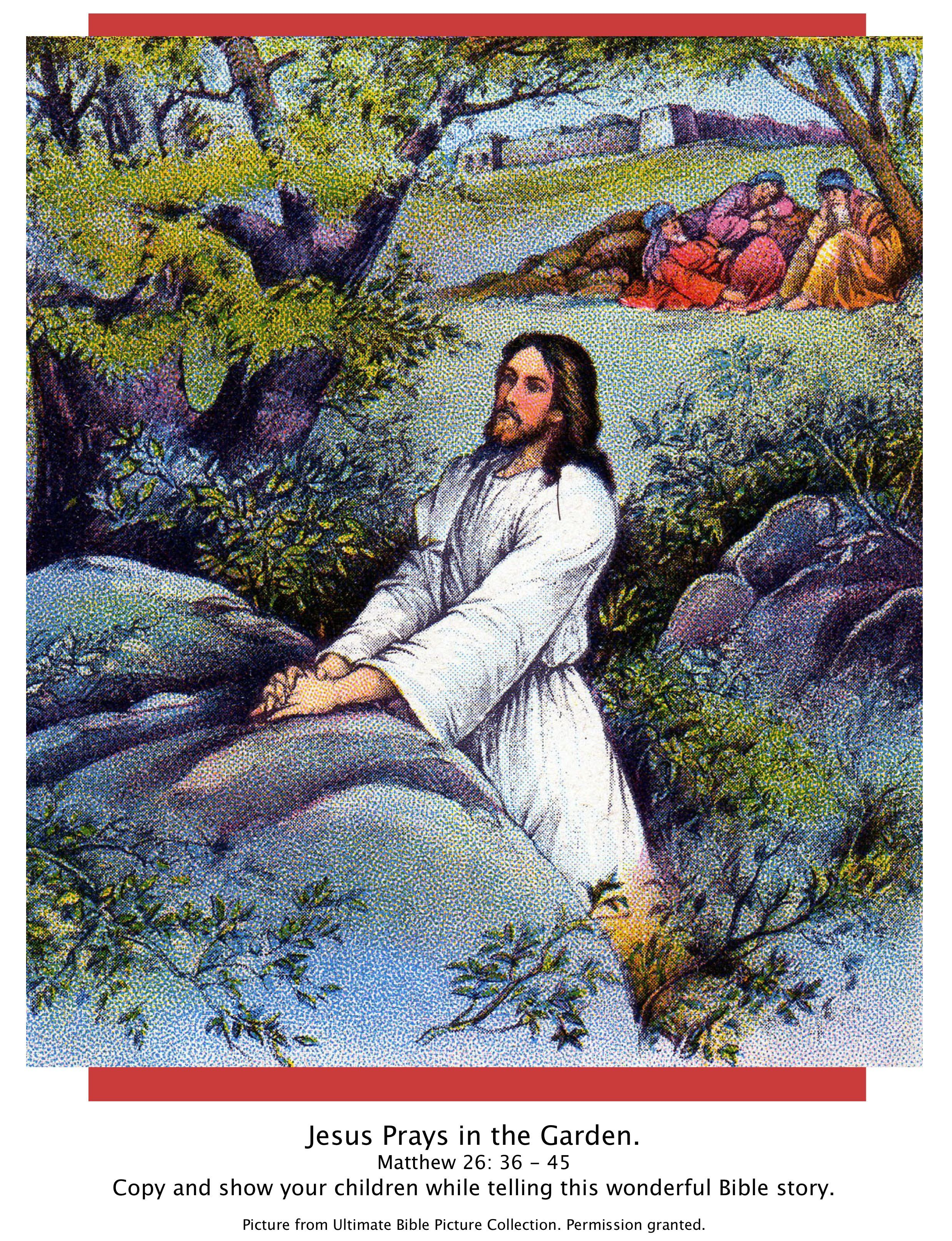Bible story picture of garden of gethsemane lk 22 39 44 show your children while telling this Jesus praying in the garden of gethsemane