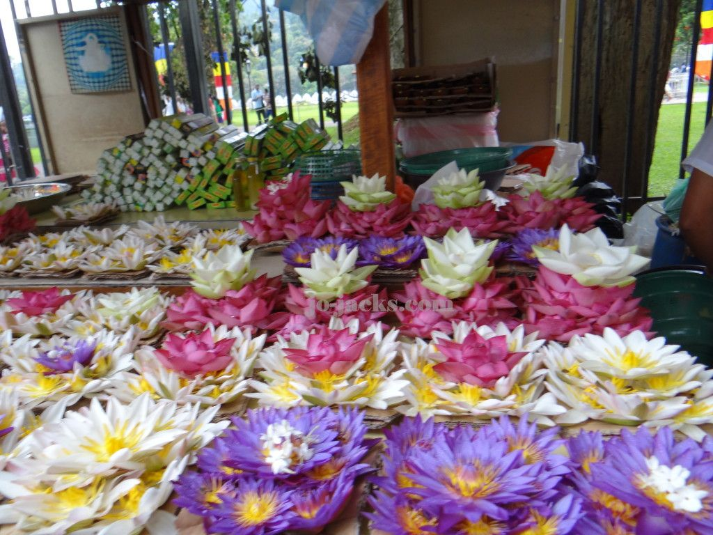 Lotus flowers for sale outside the temple of the golden tooth relic lotus flowers for sale outside the temple of the golden tooth relic in kandy sri lanka see how our family travel there with children was an opportunity to izmirmasajfo