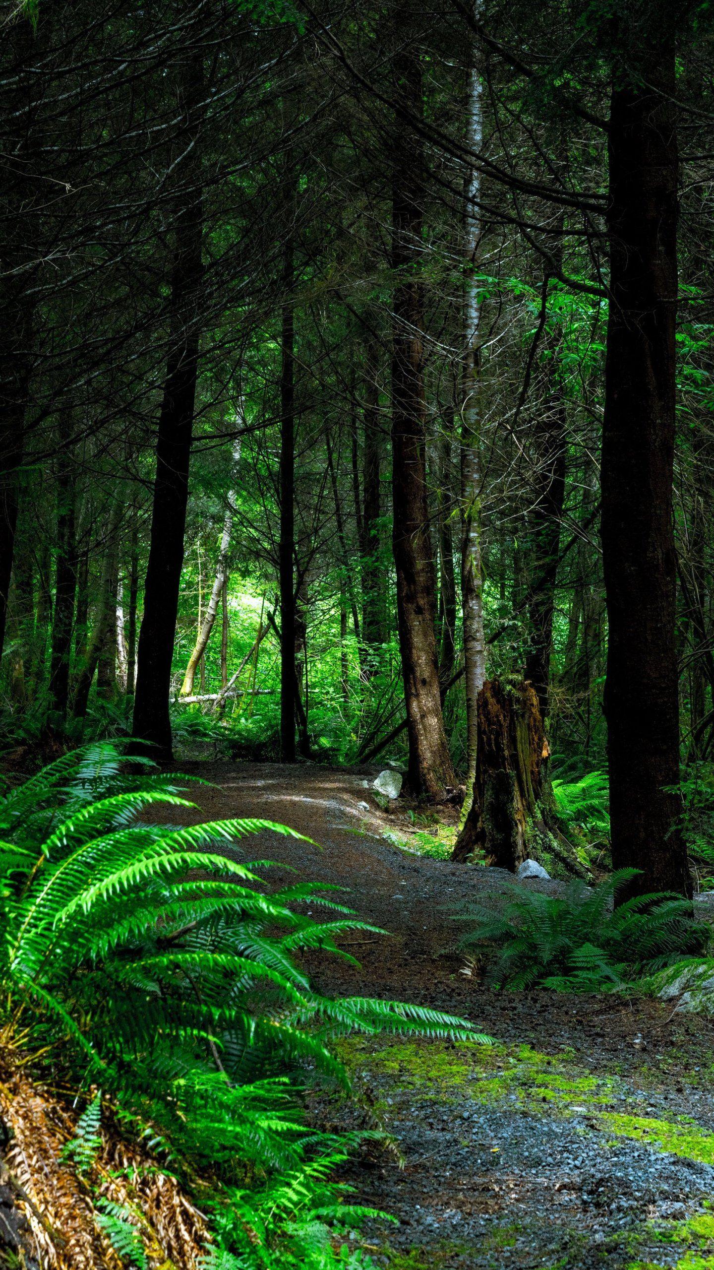 Forest Path Wallpaper Iphone Android Desktop Backgrounds Forest Path Landscape Pictures Landscape