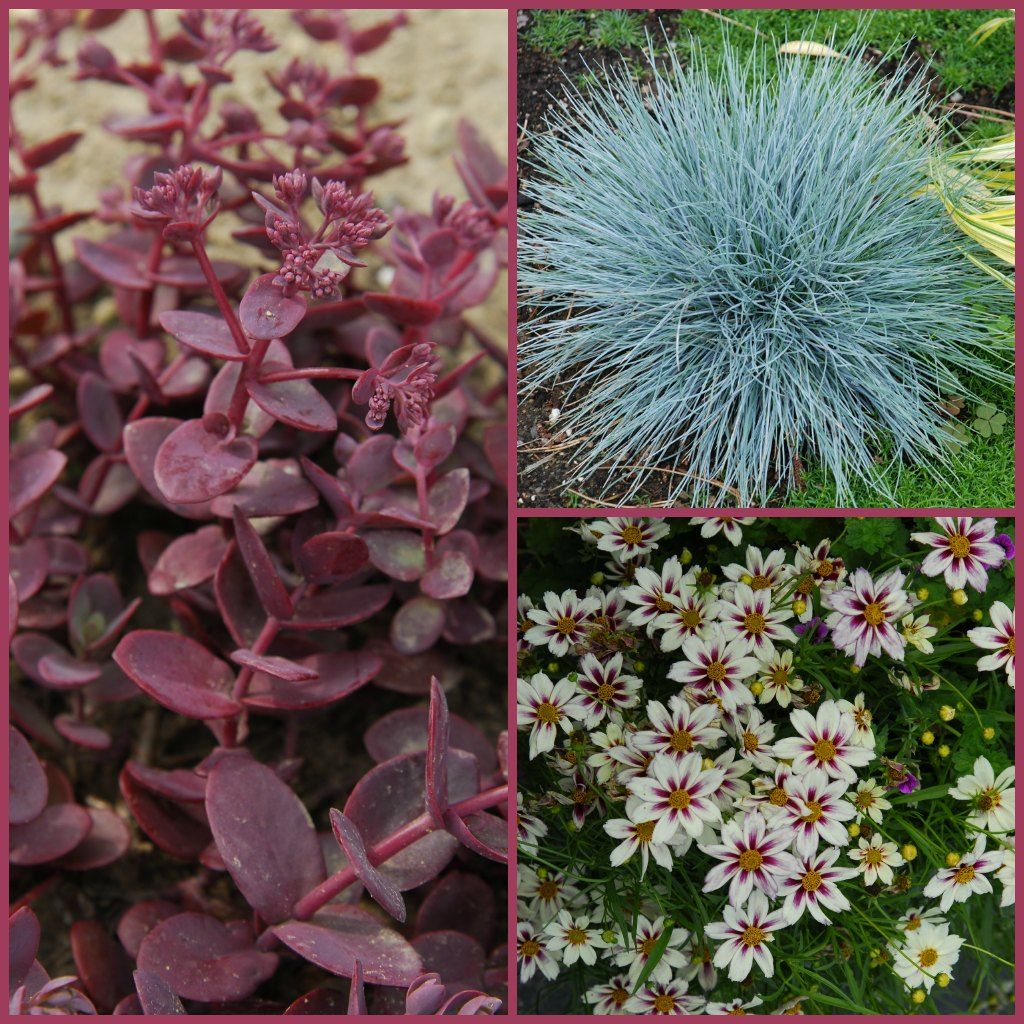 Container gardening ideas for full sun - Need Full Sun And Well Drained Soil