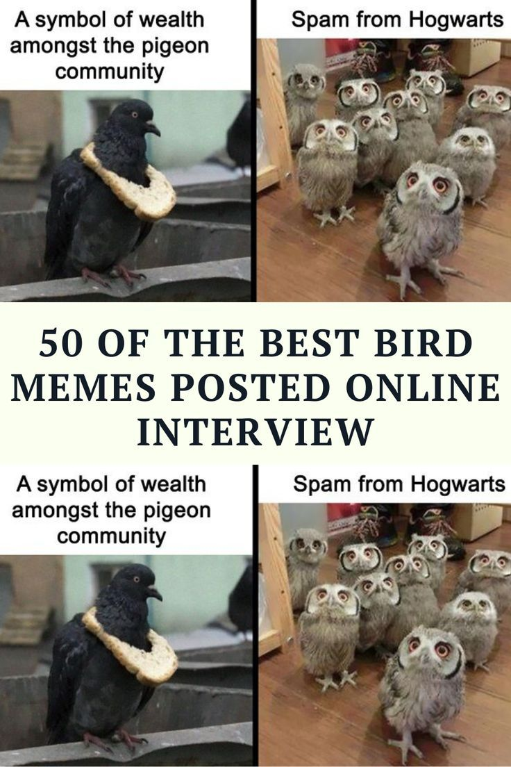 Our nature and animal-loving team here at Bored Panda has searched the wilds of the internet to bring you the very best, funniest, and featheriest bird memes