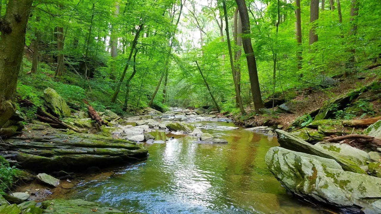 Relaxing Gentle Stream Soothing Nature Video Water Sounds White Noise Nature Gif Nature White Noise