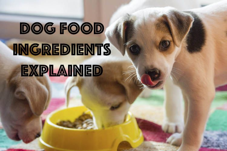 Dog Food Ingredients Explained With Images Dog Food Recipes