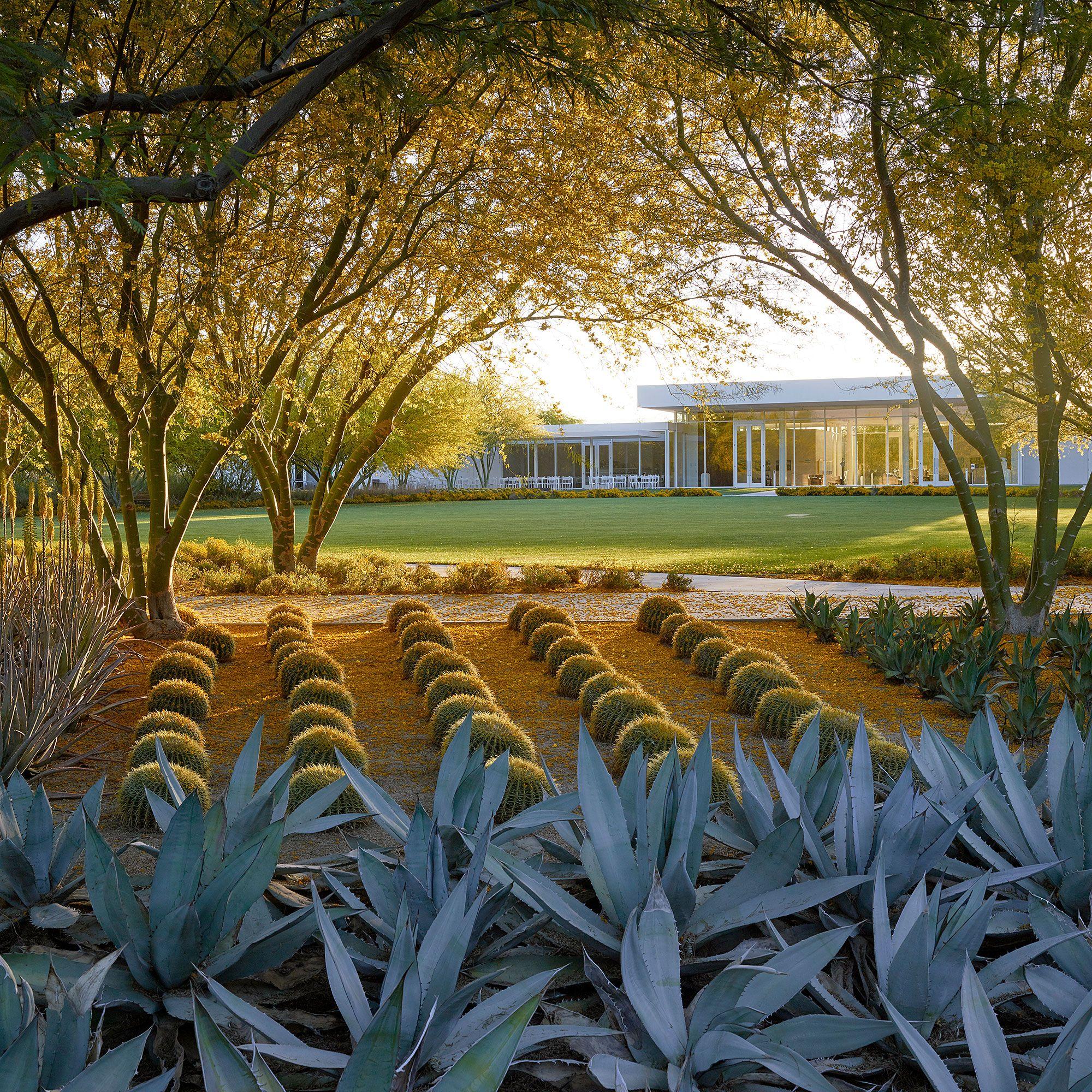 Stunning Palm Springs Gardens Desert landscaping, Spring