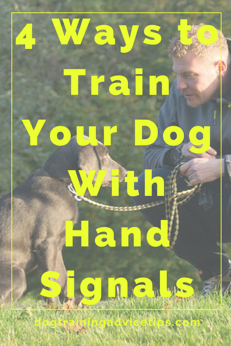 How to Teach Your Dog to Respond to Hand Signals  Dog Obedience Training  Dog Training Tips  Dog Training Commands  gtrainingad art breeds cutest funny training bilder lu...