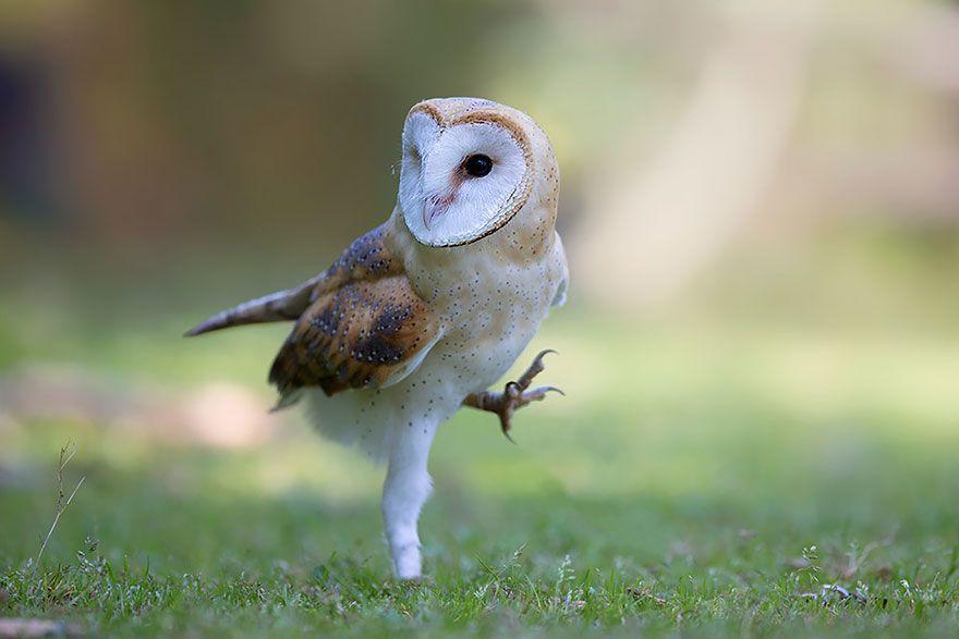 owl-photography-7__880