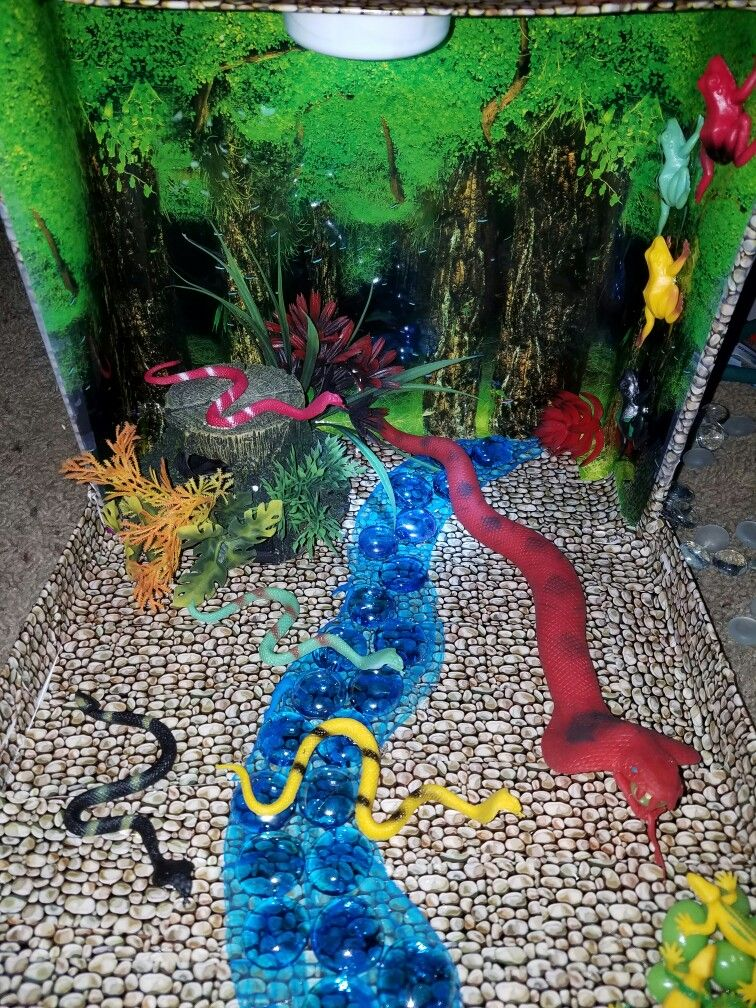 snake diorama project kids pinterest dioramas school and