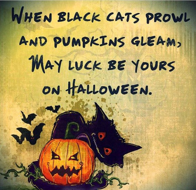 Funny Halloween Quotes Sayings And Wishes 2016 With Cute Images. Hilarious  Puns And Funny Messages For Adults, Kids And Girls To Send On Happy  Halloween Day