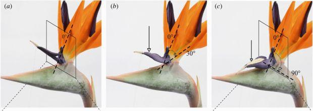Strelitzia Reginae Anatomy Google Search Tropical Paradise Wind Sock Outdoor Decor