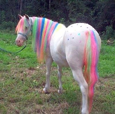Rainbow Horse Yes Virginia There Is A Rainbow Horse With