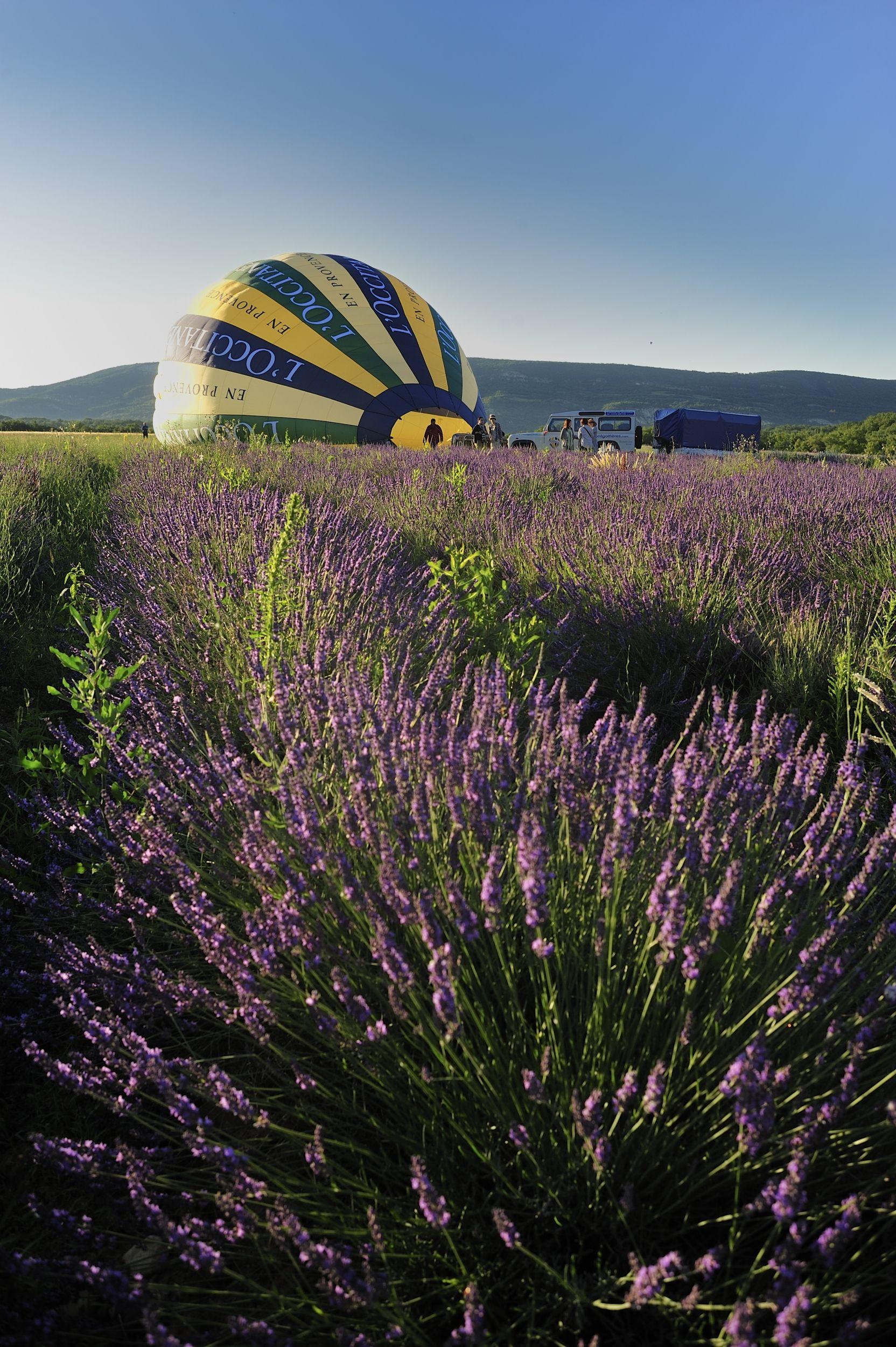 Among The Fragrant Lavender Fields This Balloon Starts Its Journey Loccitane En Provence Loccitane And Repinforsweetskin Campo De Lavanda Em 2019 Ceu
