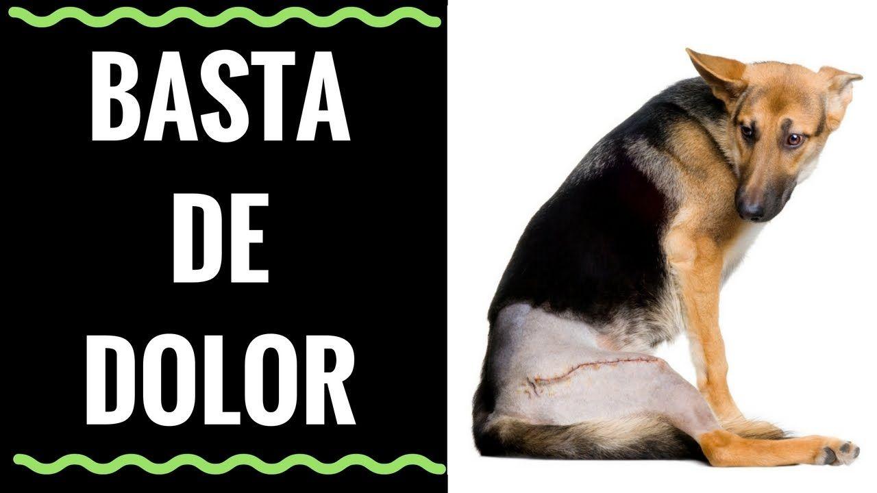Un Antiinflamatorio Para Perros Muy Efectivo Termina Con El Dolor En P Perros Abrigos Para Perros Mascotas