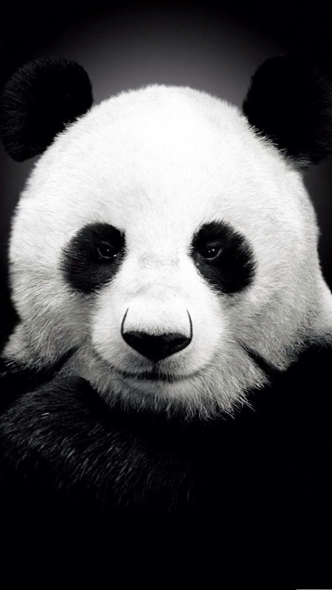 Pin By Cheryl On Bw Animals Panda Wallpapers