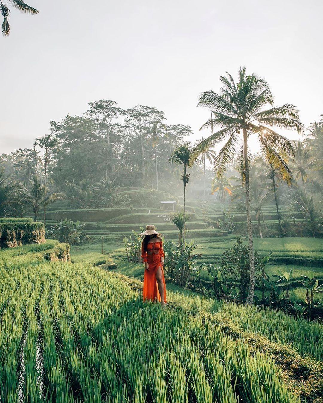 Sistem Pengairan Sawah Di Bali Disebut : sistem, pengairan, sawah, disebut, Sistem, Pengairan, Disebut, IlmuSosial.id