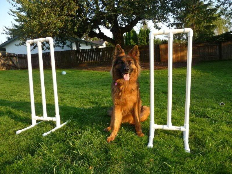Diy agility equipmentdo it yourself ideashints page