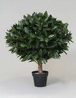 Laurel Topiary 70cm