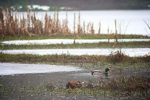 Beaver Lake | da cisley