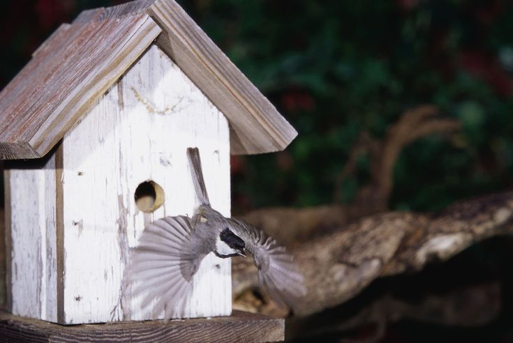 The Best Time to Put Up Bird Houses