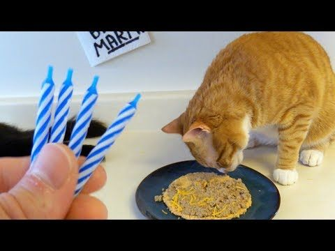 How To Make A Cat Birthday Cake X2f Pizza Youtube