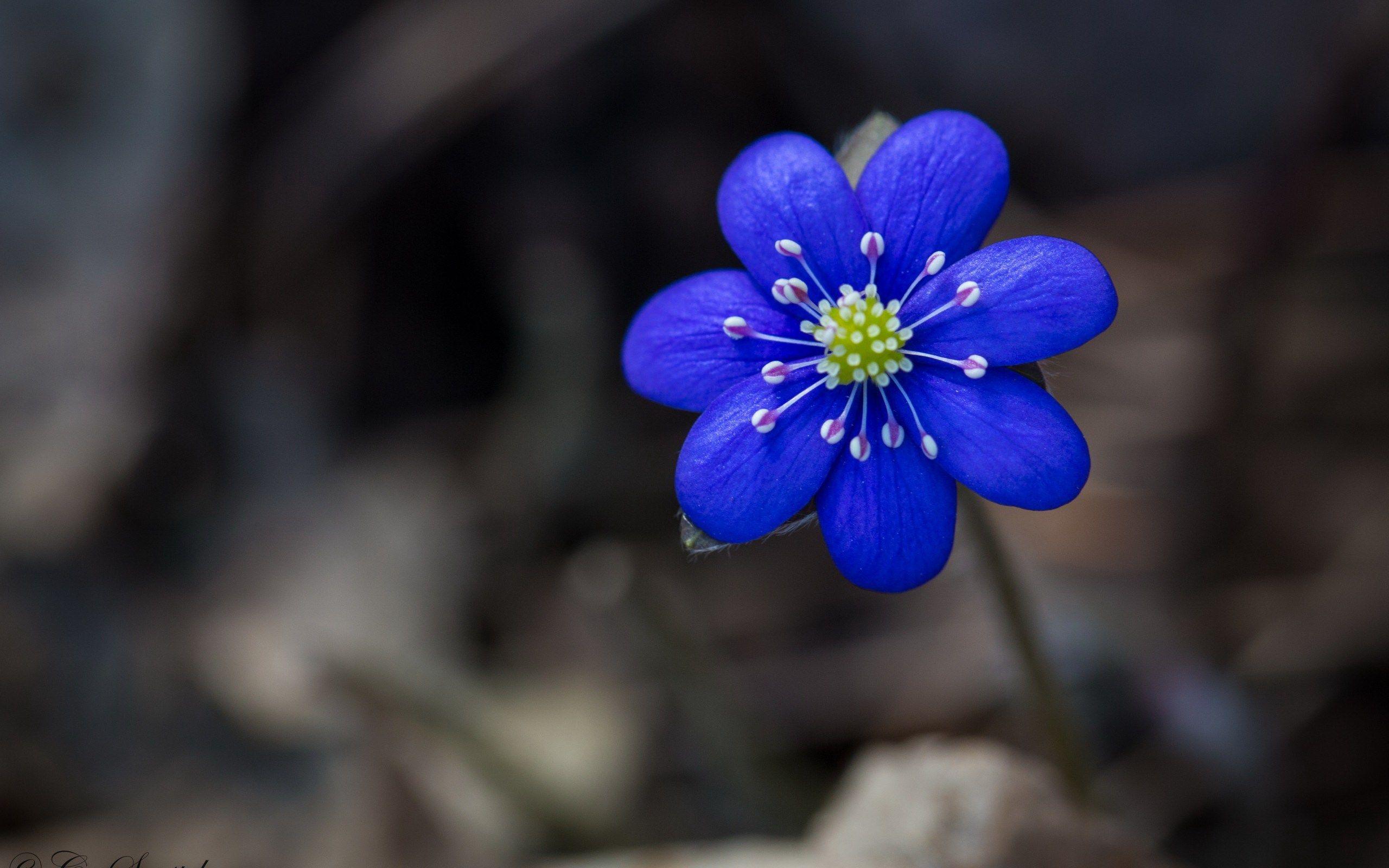 Flower To Download Gogolmogol Pinterest Flower