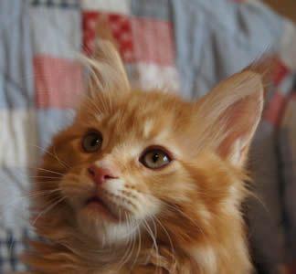 Epingle Sur The Kitties